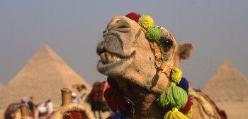 egypt069.jpg